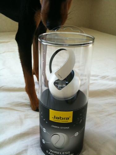 Jabraさんからモニター製品が届きました!黒犬も興味津々?