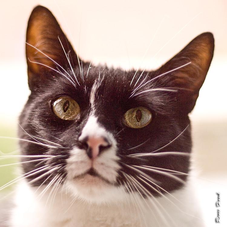 meow?!?