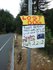 Lost Dog in Guerneville
