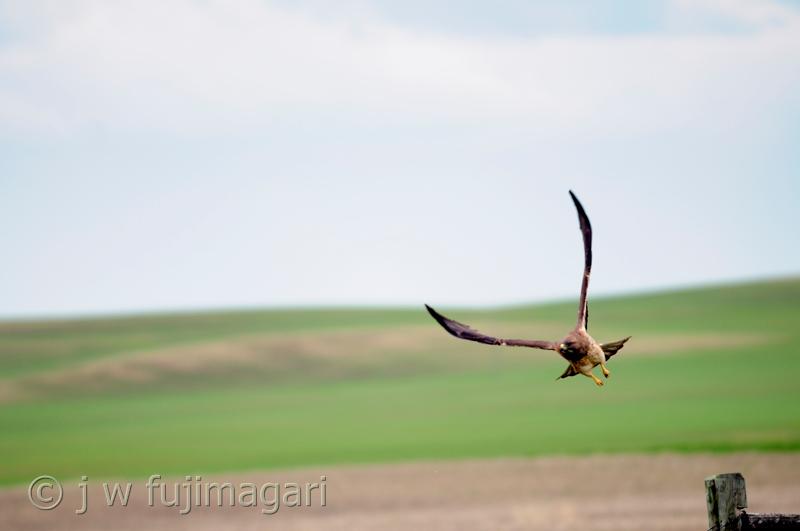 On Upraised Wings