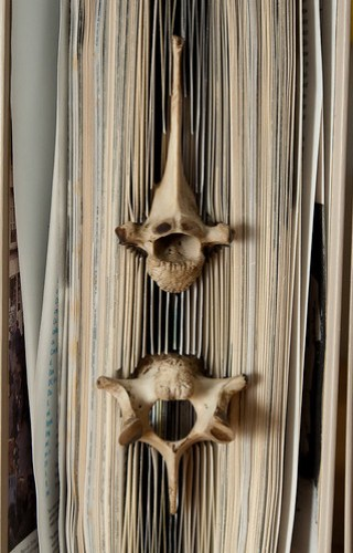 Forgotten Knowledge - detail of deer bones