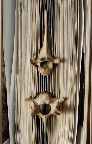 Forgotten Knowledge - detail of deer bones