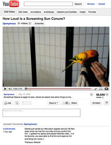 Screaming Sun Conure Saves the Day