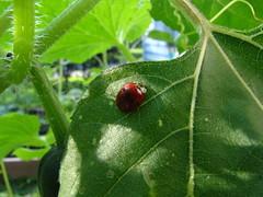One Hard Working Ladybug