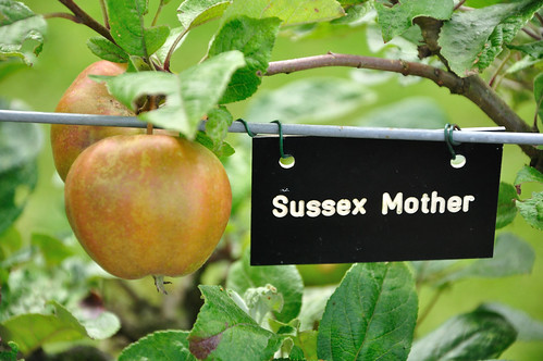 Sussex Mother