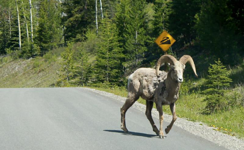 Ram Crossing