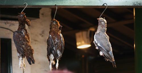 Borough Market Birds