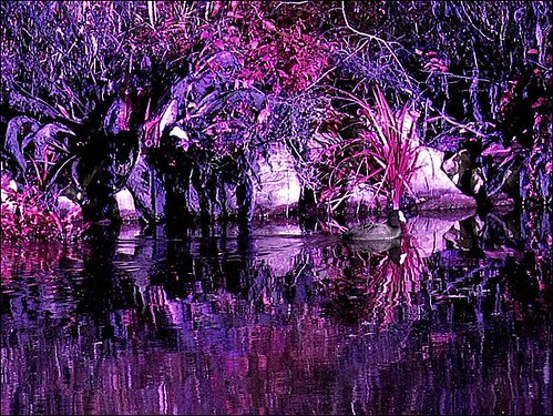 Fall Tree Desktop Wallpaper Purple Autumn A Photo On Flickriver