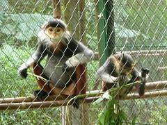 Monos. Parque Nacional de Cuc Phuong