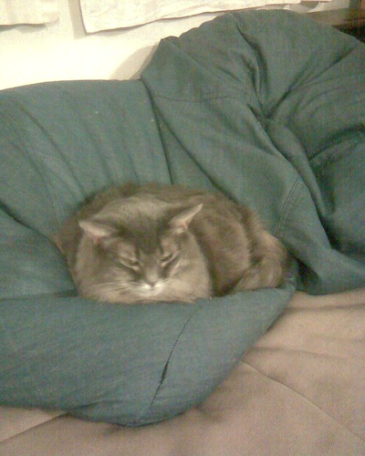 Kitty on a beanbag