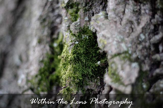 tree moss, tree, moss, tree bark, bark, photography, nature, within the lens