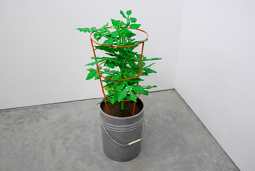 Untitled Project: Produce [How to Grow a Tomato Plant]