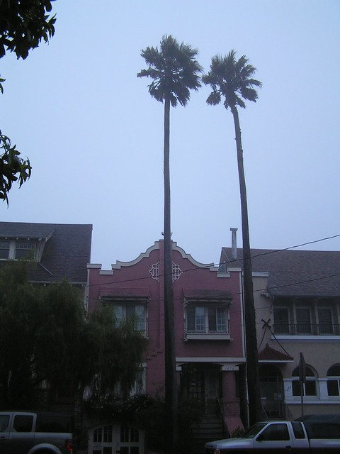 Palm trees, San Francisco