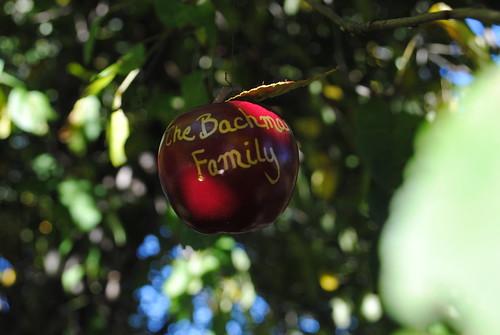 apple tree placecard