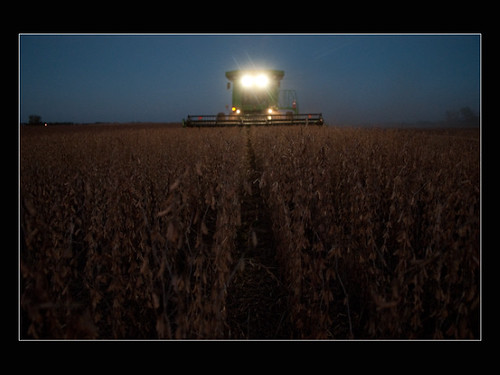 Soybean Harvest at Night