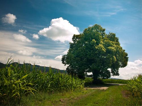 12x ein Baum - Juli