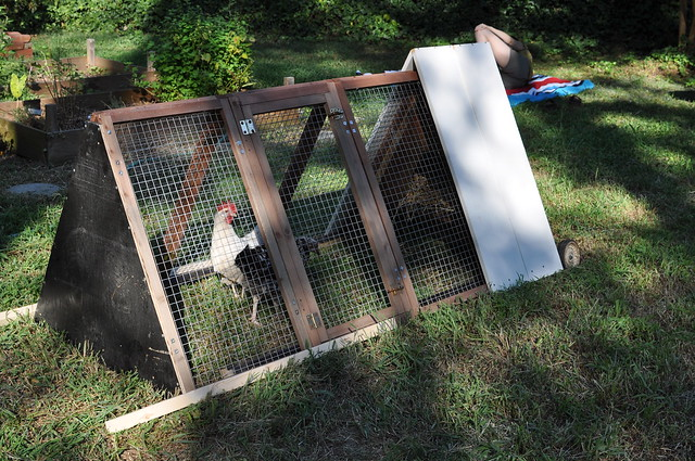 Recycled Materials, New Chicken Tractor
