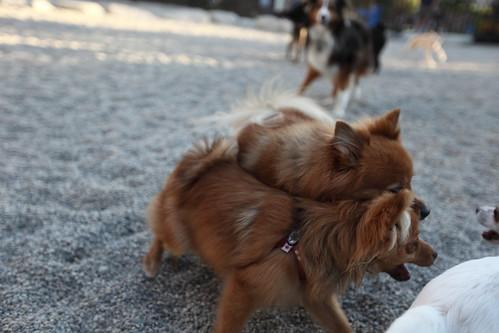 Pom^2 on Chihuahua Violence.