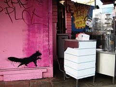 Another urban fox...