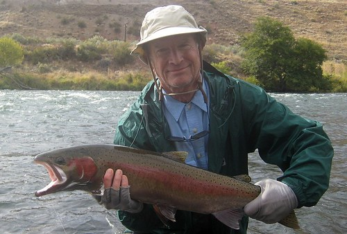 Wild Deschutes River buck steelhead, cropped