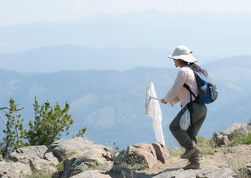 Goat Peak Butterfly field trip