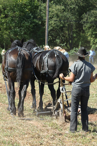 The Team Of Black Horses