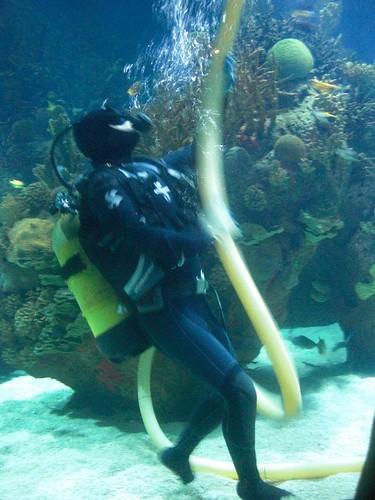 Aquarium cleanup