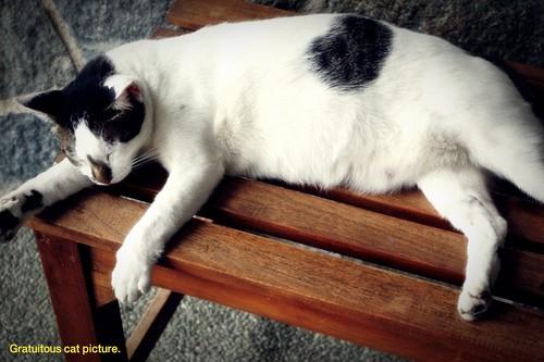 Random cat waiting at ferry terminal