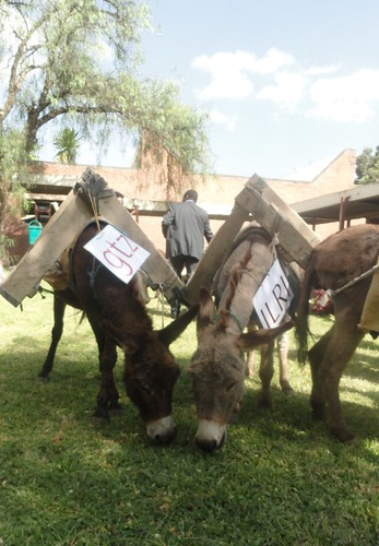 Making knowledge travel by Donkeys - ILRI and GTZ
