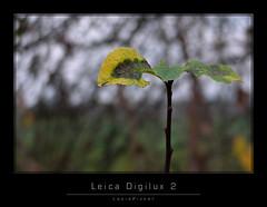LeicaDigilux2_1