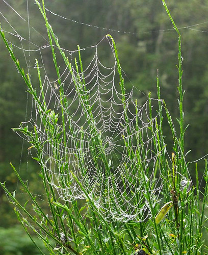 Oh what a tangled web we weave