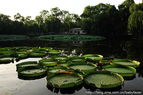 Beijing 274
