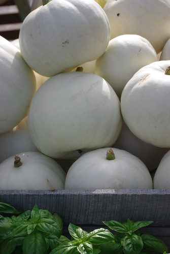 Albino pumpkin pile