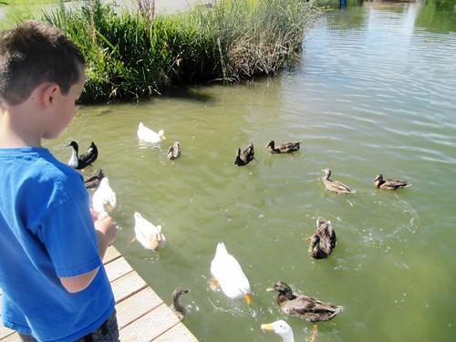 Salem Pond 02