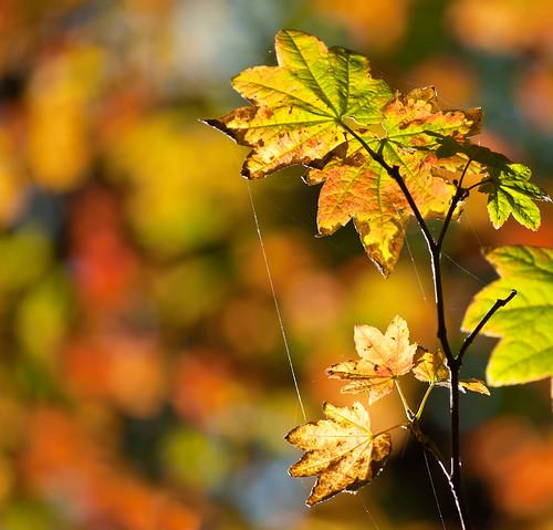 Last Rays of Autumn Light