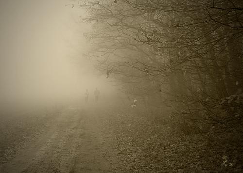 Nebelsichten