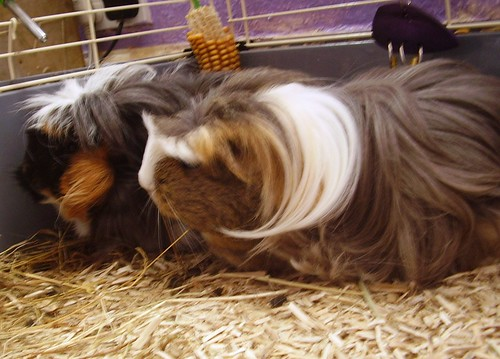 Chloe and Poppet September 02