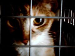 Aquí hay gato encerrado... (Centro Veterinario...