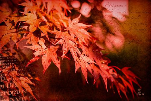 Light of autumn