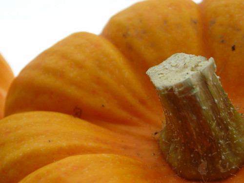 Munchkin Pumpkins 002
