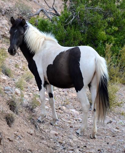 NM Wild Horses nwm (8)