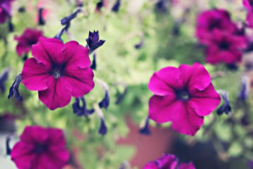 IMG_4089flowers