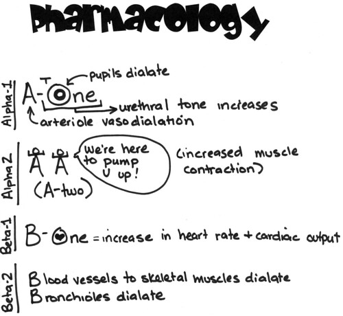 JJC Vet Tech Student Blog: Pharmacology: Sympathetic Receptors
