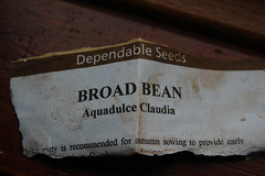 10 10 09_broad_beans_0003