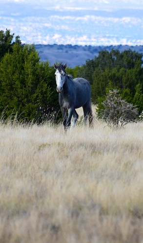 NM Wild Horses nwm (11)