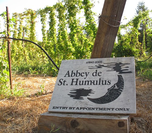 Hop harvest at the Abbey de St Humulus