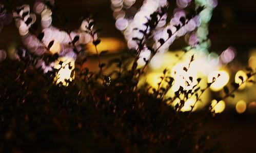Dancing Night Lights