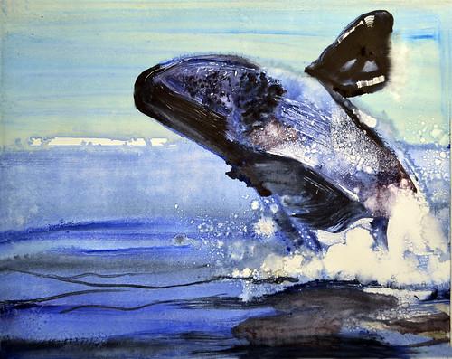 whale dream 2