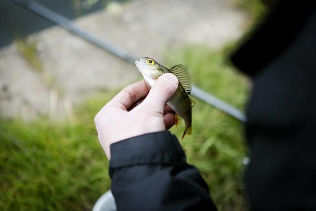 Fishing_14
