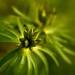 När det gröna väcks till liv igen.